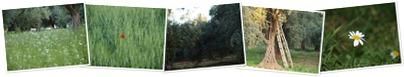View Sahnaya-Dark Jasmine